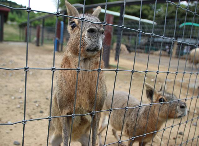 動物とふれあえる「こども動物園」2