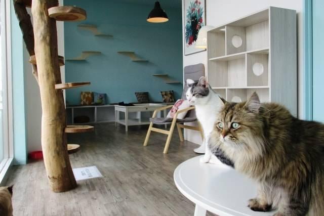 Moff animal cafe(モフアニマルカフェ)を楽しむ!