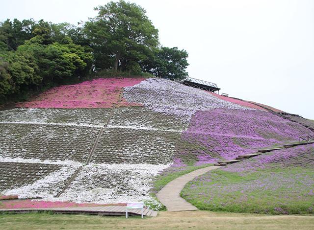 関東最大級の面積の花畑!季節のお花を楽しもう3