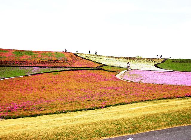 関東最大級の面積の花畑!季節のお花を楽しもう2