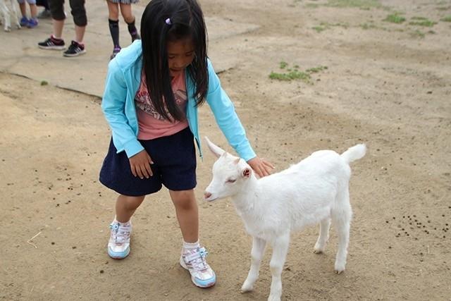 東京ドイツ村の「こども動物園」でヤギやヒツジとふれあおう!