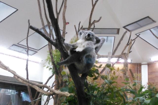 動物とふれあえる!埼玉の動物園おすすめ10選|犬や猫・うさぎなど