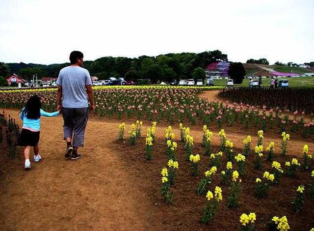 関東最大級の面積の花畑!季節のお花を楽しもう5