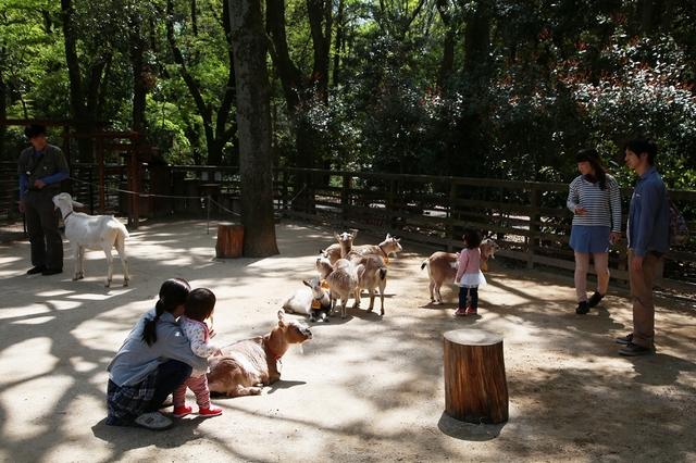 関東のふれあい動物広場