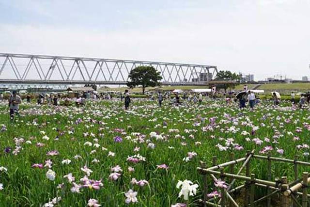 江戸川区おすすめ公園10選!人気の総合レクリエーション公園情報も