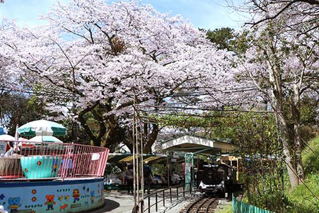 【神奈川】横浜・相模原周辺の子連れで楽しめるお花見穴場スポット