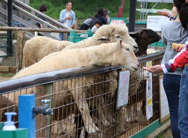 動物とふれあえる「こども動物園」
