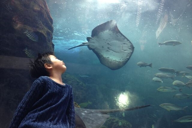 『新江ノ島水族館』クラゲ&イルカショーの見どころをチェック!