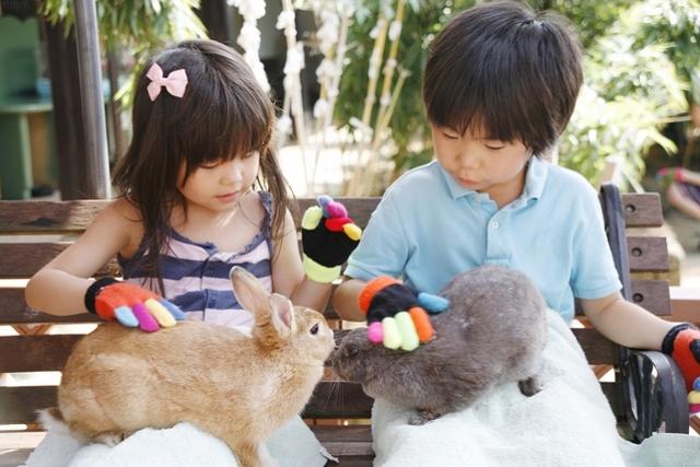 可愛い動物たちと間近に触れ合う!関東のおすすめスポット6つ