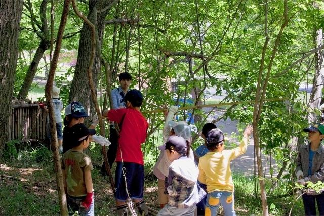東京で『昆虫採集』できる公園5つ!カブトムシ・クワガタも