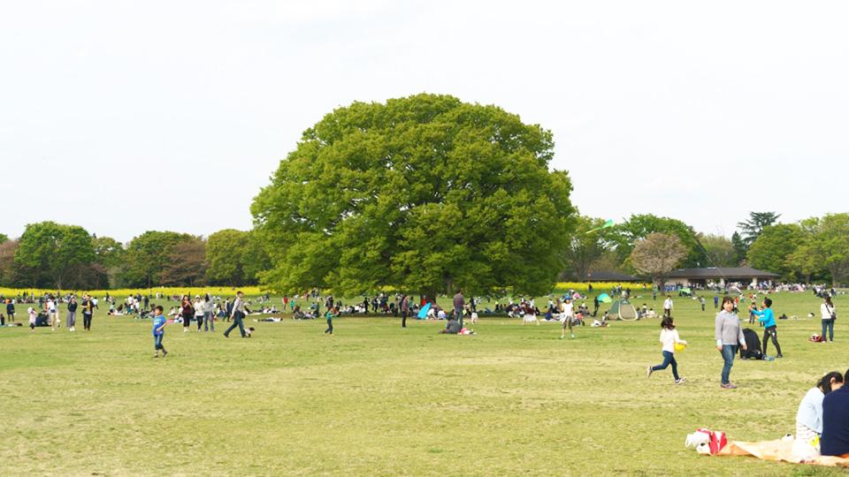 国営昭和記念公園の遊びスペースです。