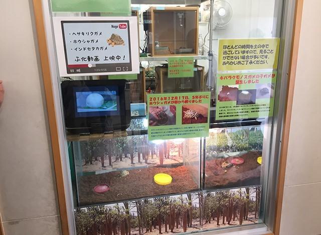 野毛山動物園100種以上の動物34