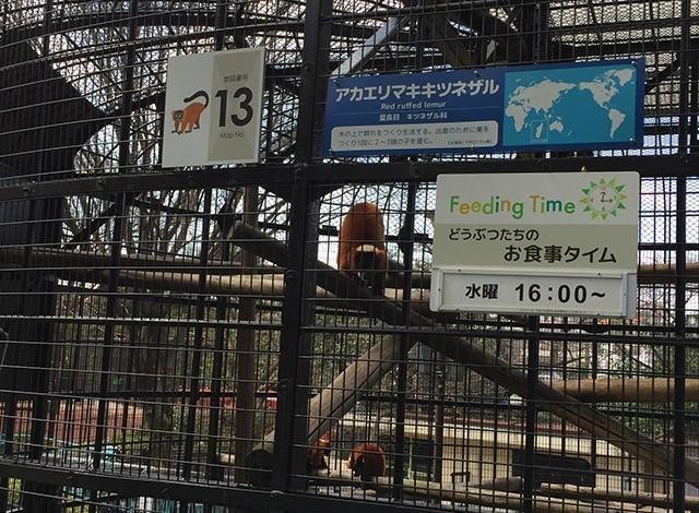 野毛山動物園100種以上の動物14