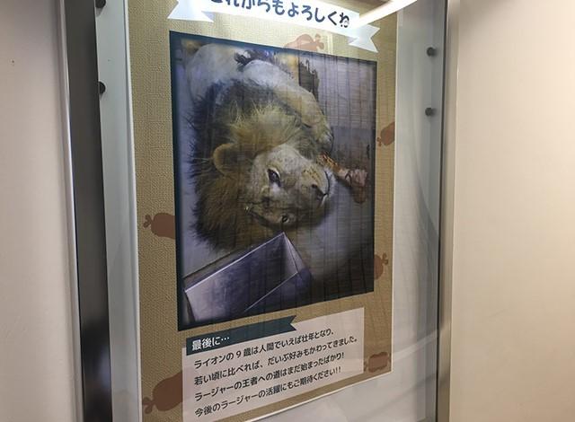 野毛山動物園100種以上の動物7