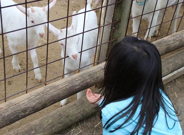 東京ドイツ村 - こども動物園 (24)