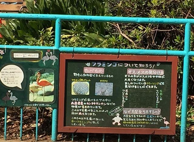 野毛山動物園100種以上の動物39