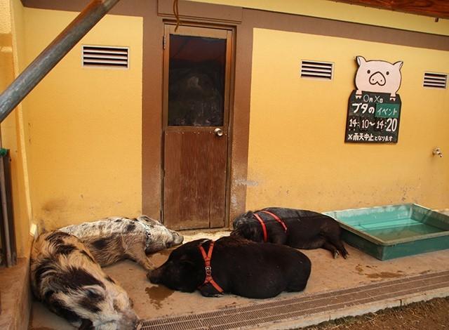 東京ドイツ村 - こども動物園 (6)