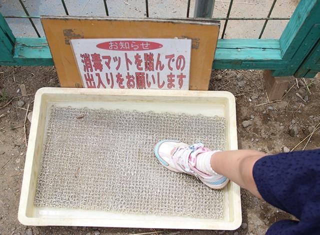 東京ドイツ村 - こども動物園 (26)