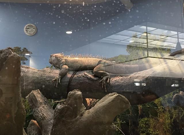 野毛山動物園100種以上の動物28