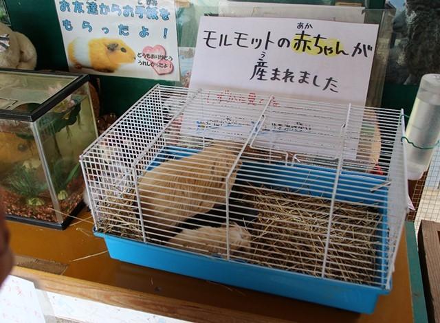 東京ドイツ村 - こども動物園 (39)