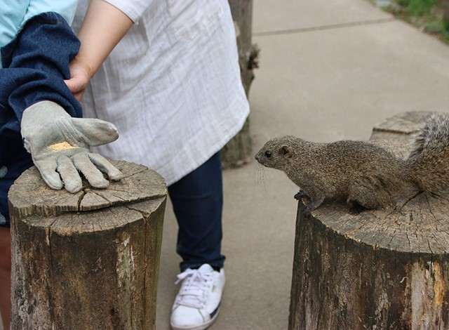 東京ドイツ村 - こども動物園 (19)