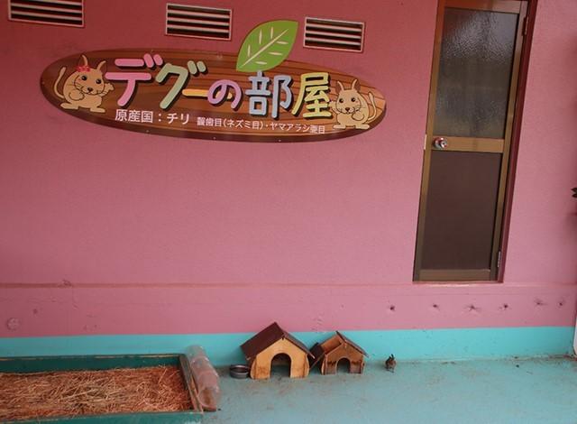東京ドイツ村 - こども動物園 (42)