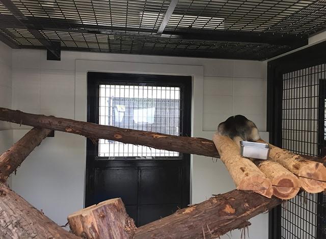 野毛山動物園100種以上の動物11