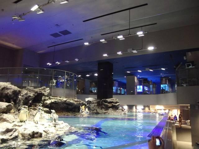 関東水族館16選9