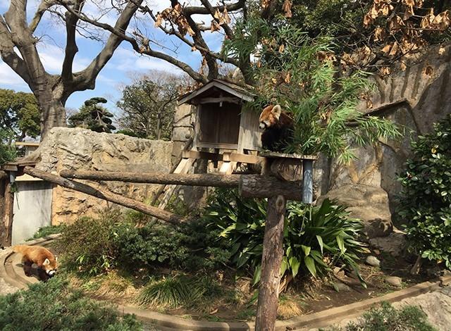 野毛山動物園100種以上の動物3