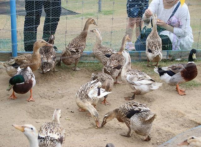 東京ドイツ村 - こども動物園 (32)