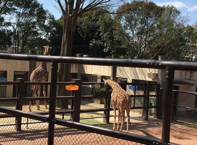 野毛山動物園100種以上の動物15