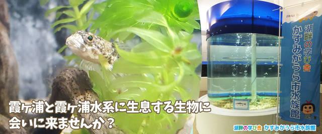 関東水族館16選27