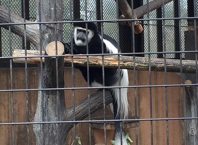 野毛山動物園100種以上の動物12