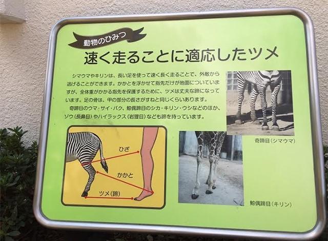 野毛山動物園100種以上の動物18