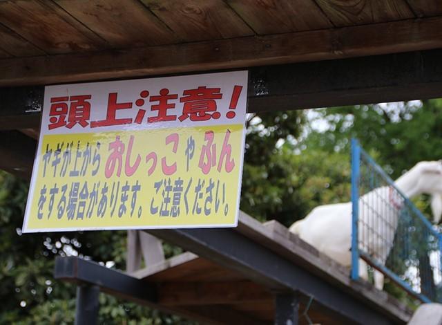 東京ドイツ村 - こども動物園 (31)