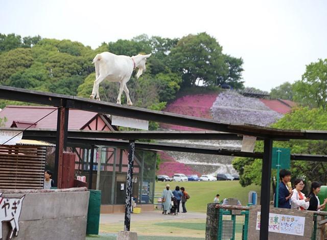 東京ドイツ村 - こども動物園 (30)