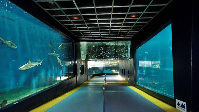 関東水族館16選19