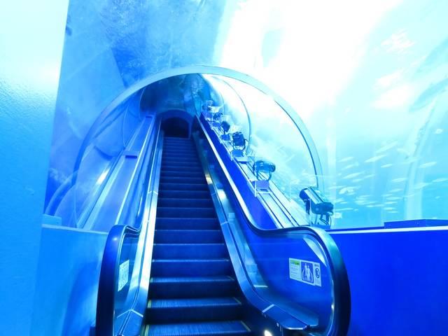 関東水族館16選16