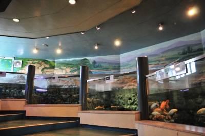 関東水族館16選28
