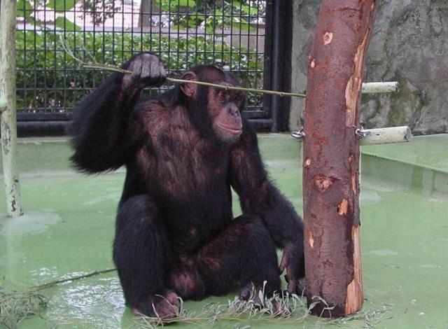野毛山動物園100種以上の動物36