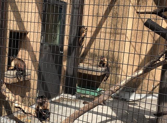 野毛山動物園100種以上の動物13