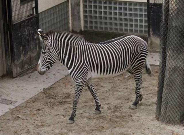 野毛山動物園100種以上の動物16