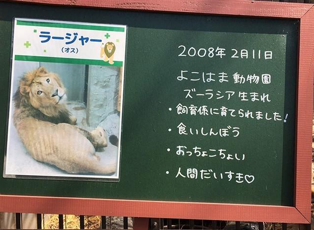 野毛山動物園100種以上の動物5
