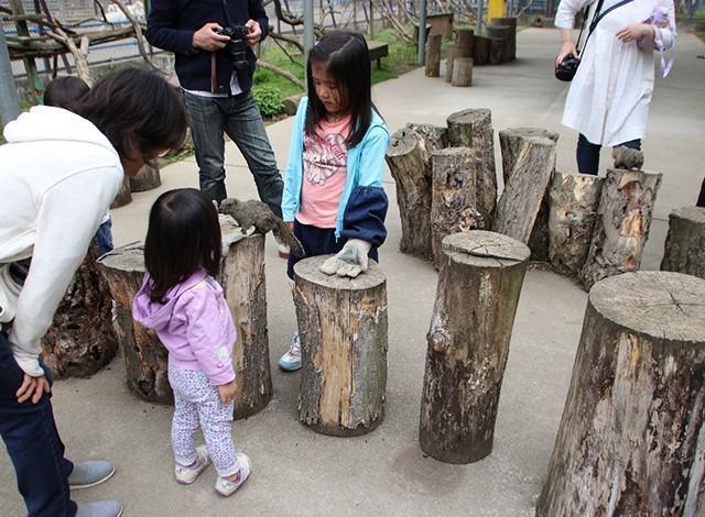 東京ドイツ村 - こども動物園 (17)