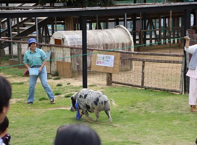 東京ドイツ村 - こども動物園 (12)