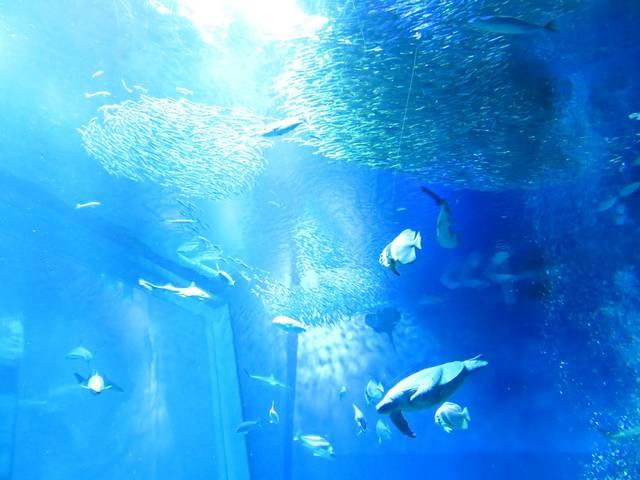 関東水族館16選26