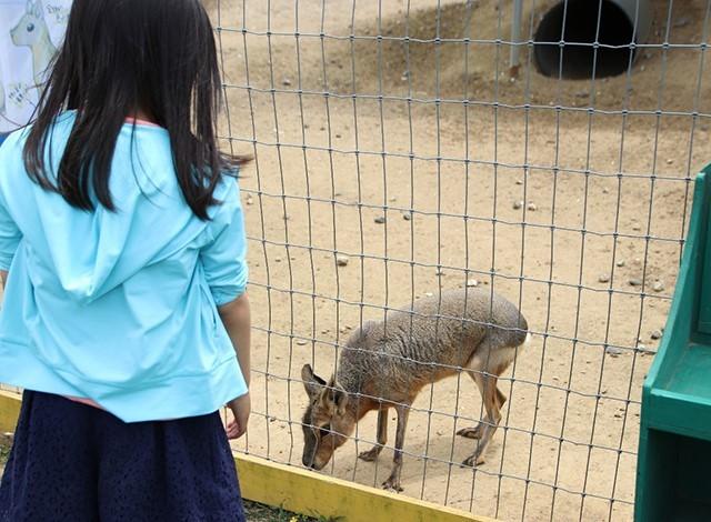 東京ドイツ村 - こども動物園 (35)