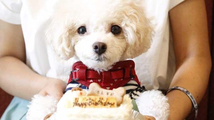 【お台場】愛犬も喜ぶ!ワンコ入店OKなカフェ・ランチのお店【クーポン有り】