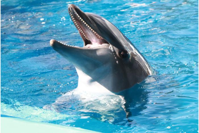 仙台うみの杜水族館 イルカ