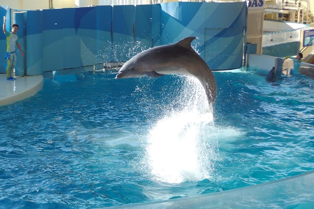 「新江ノ島水族館」はデートの聖地!2人の仲が縮まるポイントを徹底解説!